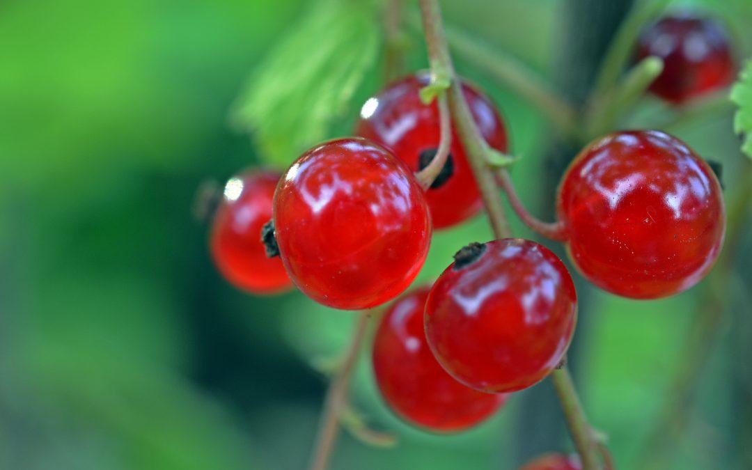 4. 6. 2021: Jak využít ovoce naše i cizokrajné pro lepší zdravotní stav
